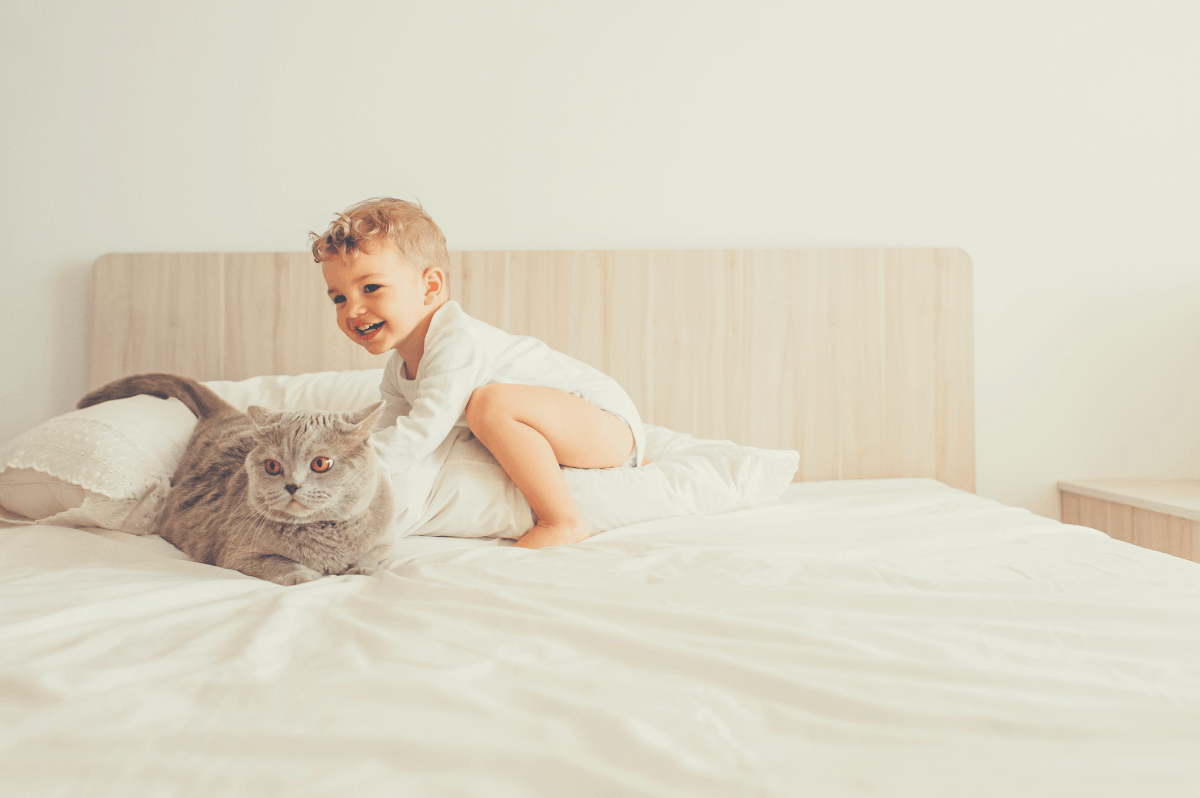 toddler playing with his cat on a twin bed with white sheets