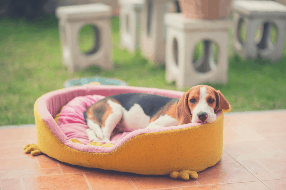puppy resting in a dog bed outdoors