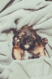 puppy wrapped with a blanket