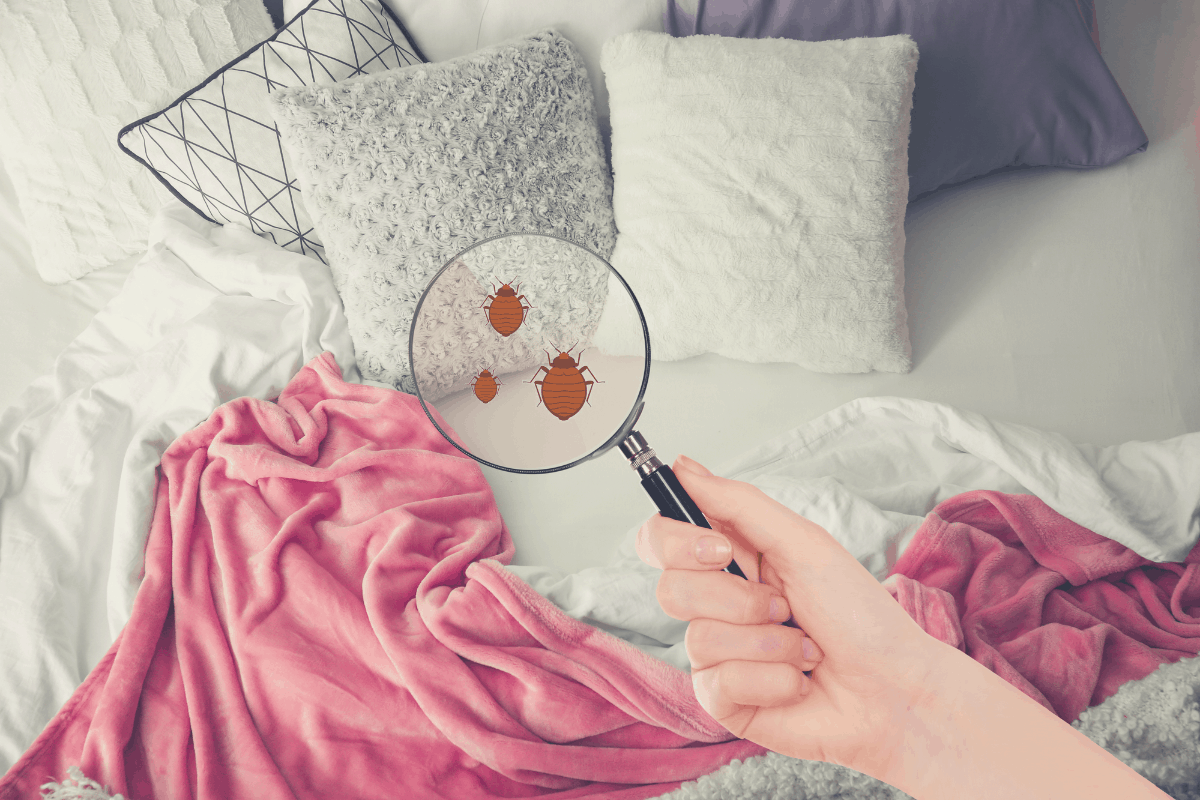 woman looking for bed bugs with a magnifying glass