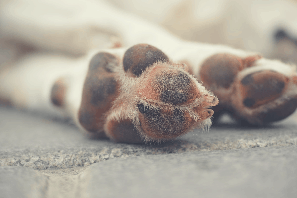 paws of a dog lying down outdoors