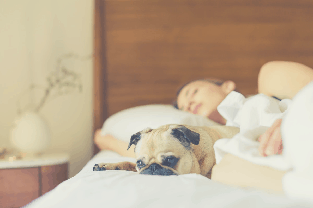dog sleeping in bed with a lady