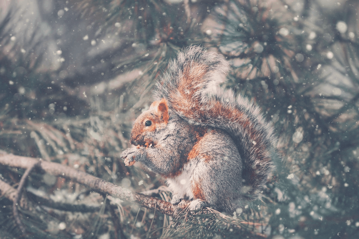 squirrel standing on tree branch in snow