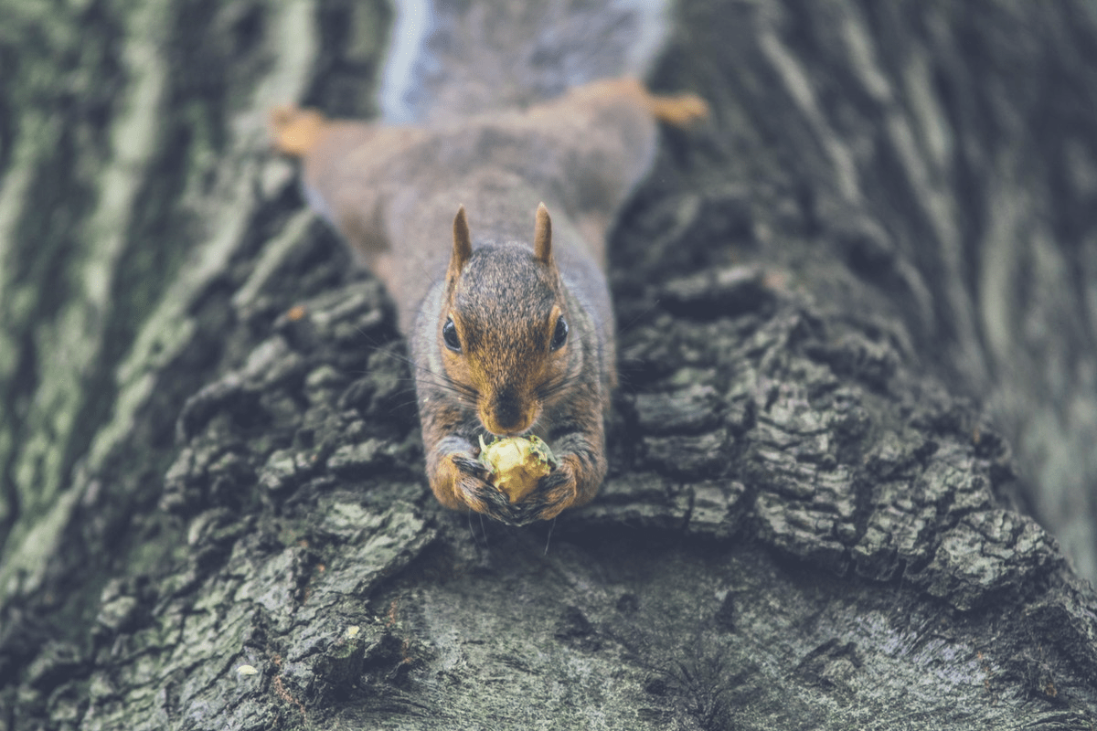 squirrel lying down on a tree