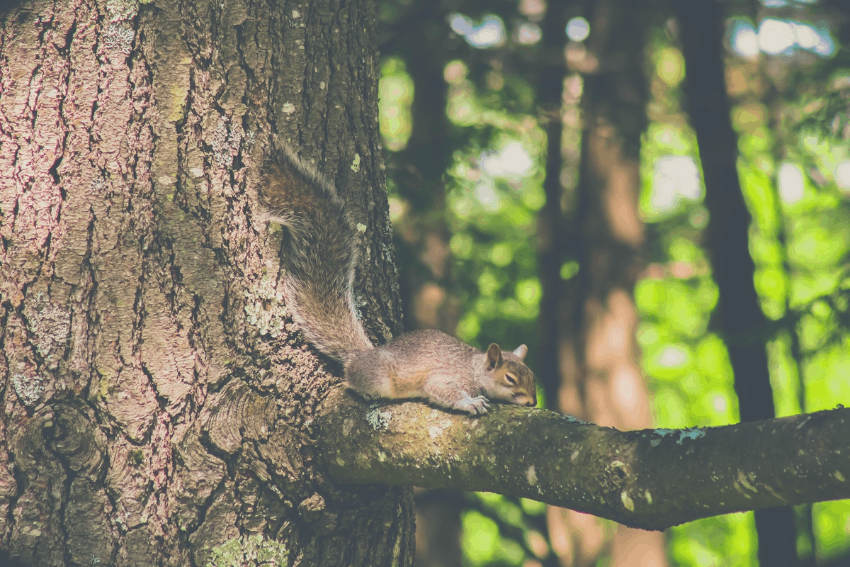 squirrel lying down on a tree branch