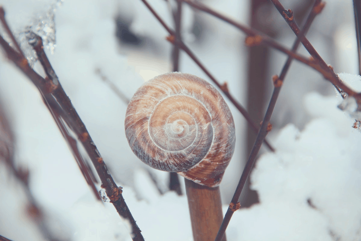 snail hibernating on a tree stem during winter