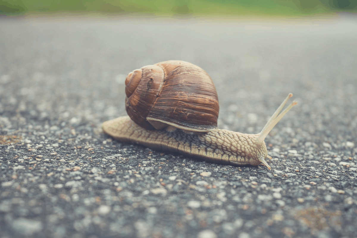snail lying on the street